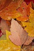 Barbee_arboretum-leaves.jpg